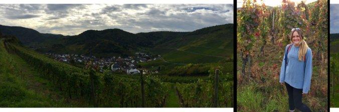 Rotweinwanderweg Mayschoss